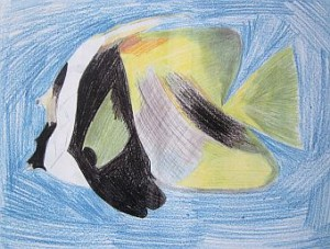 Angel Fish coloured